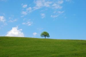 1390564_tree