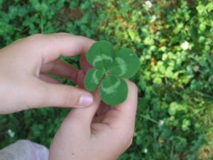 565238_four_leaf_clover